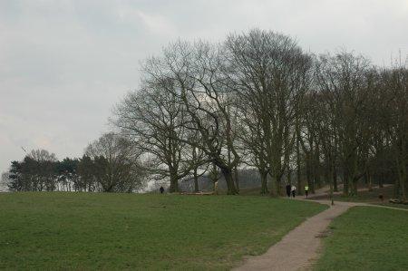 flat-heath.JPG